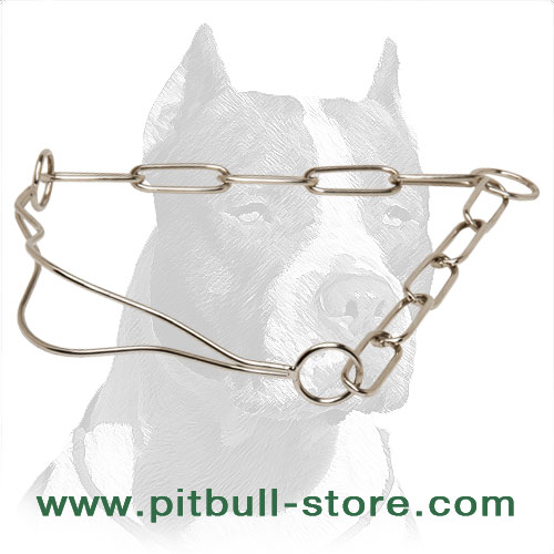 Dog chrome plated collar for Pitbulls