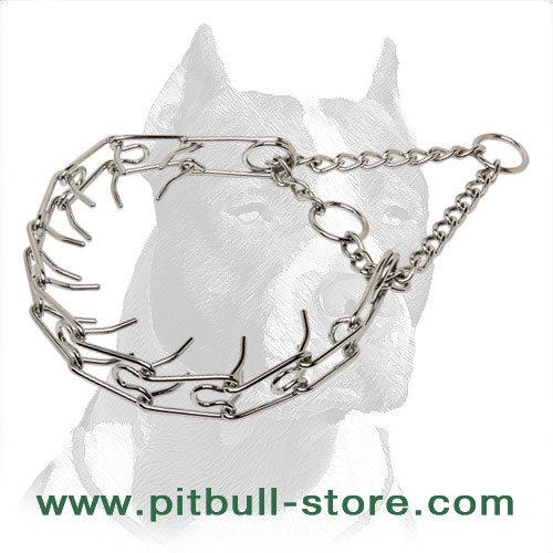Pit Bull pinch collar of extra-strong steel