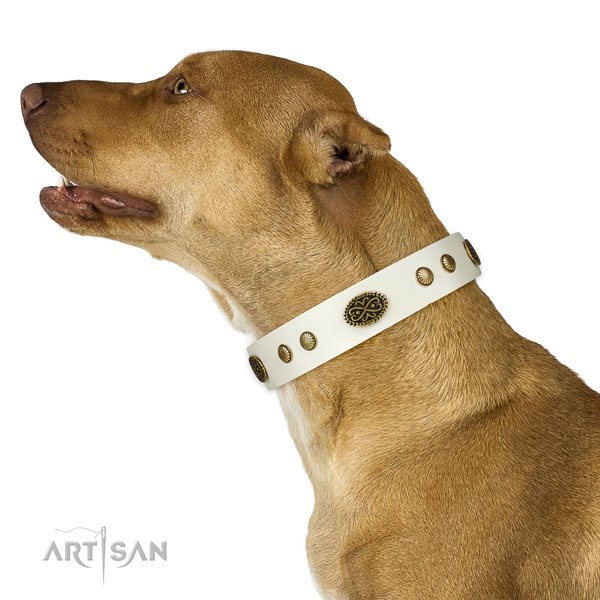 Reliable buckle on natural leather dog collar for stylish walking