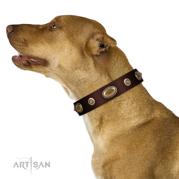 Comfortable wearing dog collar of natural leather with exceptional decorations