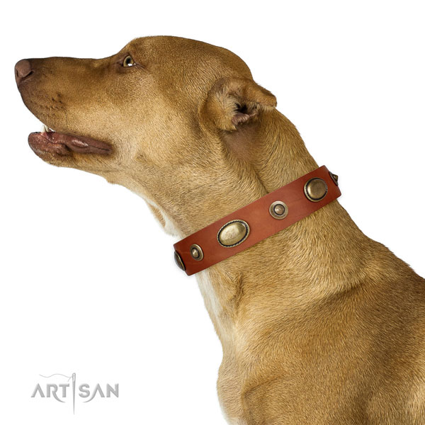 Easy wearing dog collar of genuine leather with exquisite adornments