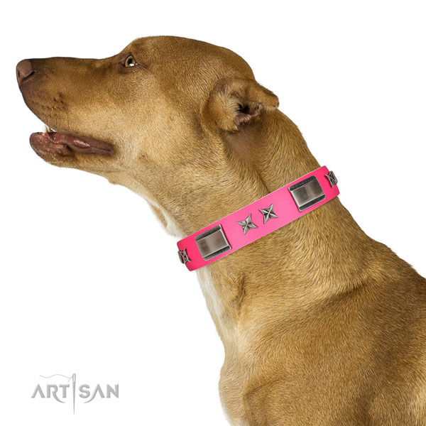 Studded collar of natural leather for your four-legged friend