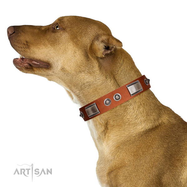 Significant leather collar with adornments for your pet