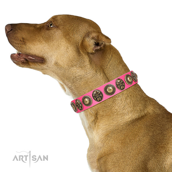 Easy to adjust leather collar for your beautiful doggie