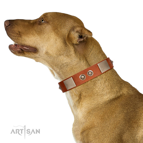 Durable buckle on full grain genuine leather dog collar for daily walking