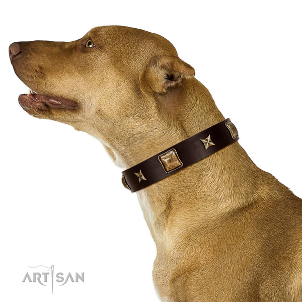 Amazing full grain natural leather dog collar with embellishments