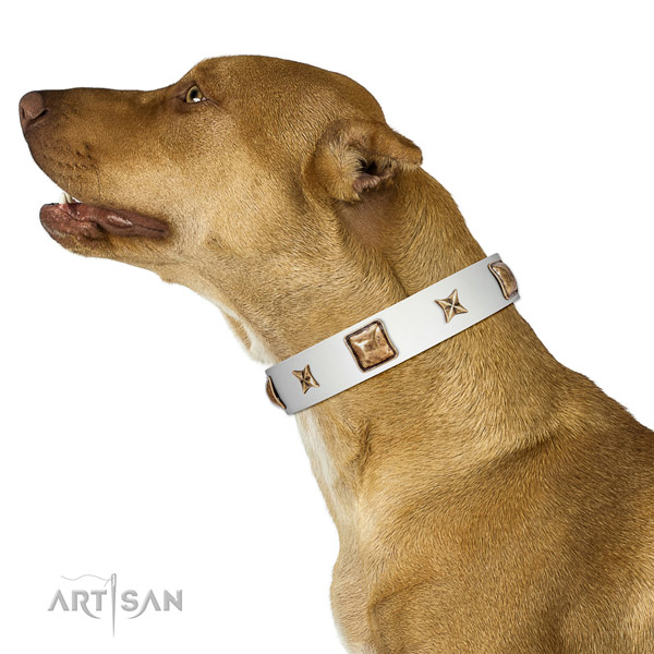 Comfortable full grain genuine leather dog collar with studs