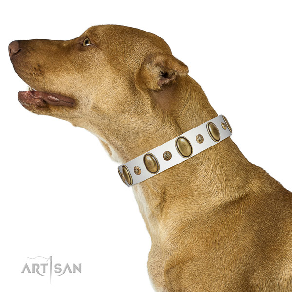 Decorated full grain natural leather dog collar with corrosion proof traditional buckle