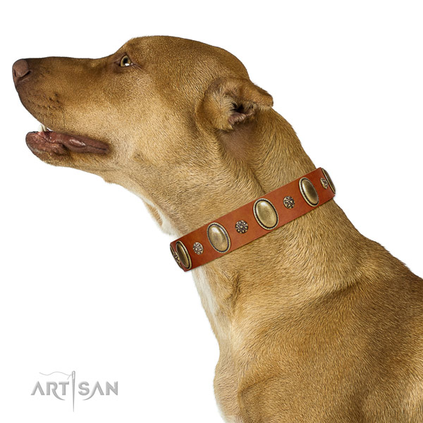 Comfy wearing soft genuine leather dog collar with embellishments