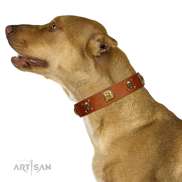 Unusual full grain natural leather dog collar with rust resistant embellishments