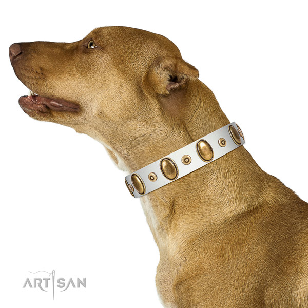 Corrosion proof embellishments on top notch leather dog collar