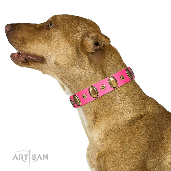 Corrosion resistant embellishments on strong full grain leather dog collar