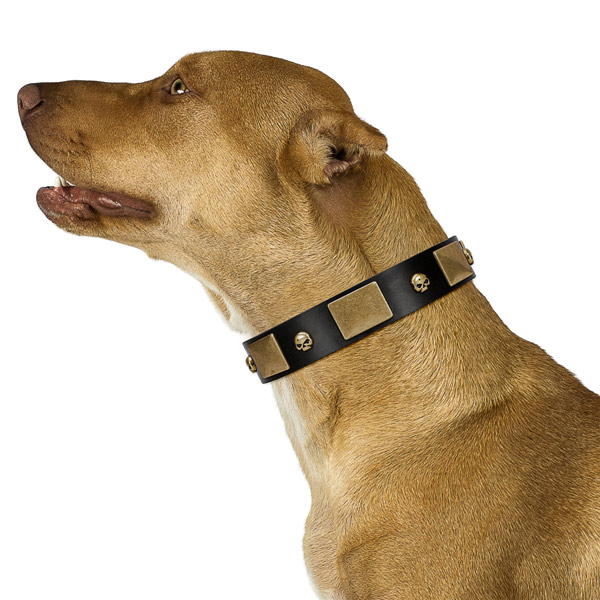 Unusual adorned full grain natural leather dog collar of quality material