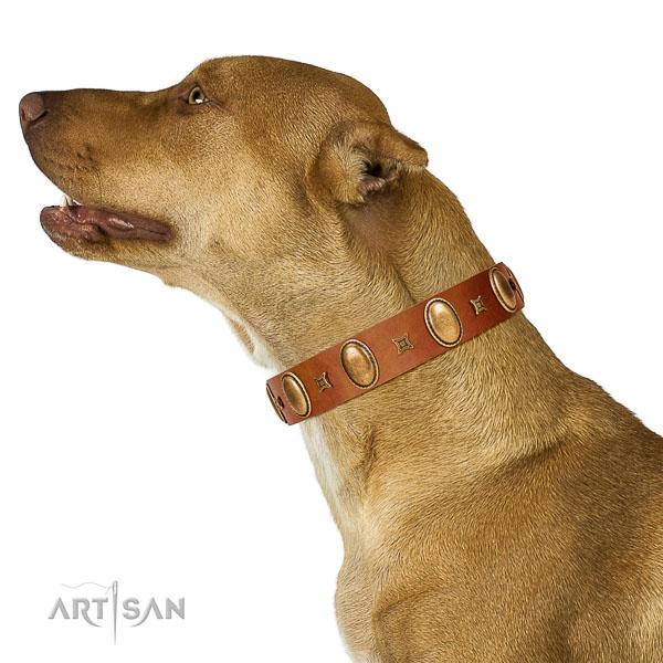 Stunning studded full grain natural leather dog collar of reliable material
