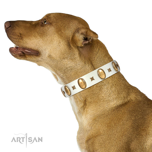 Stylish design adorned natural leather dog collar of top notch material