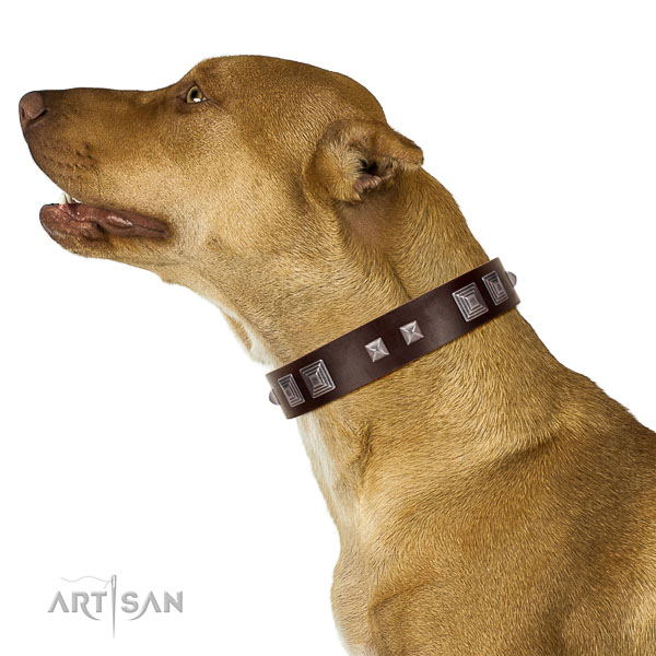 Genuine leather dog collar of soft to touch material with trendy decorations
