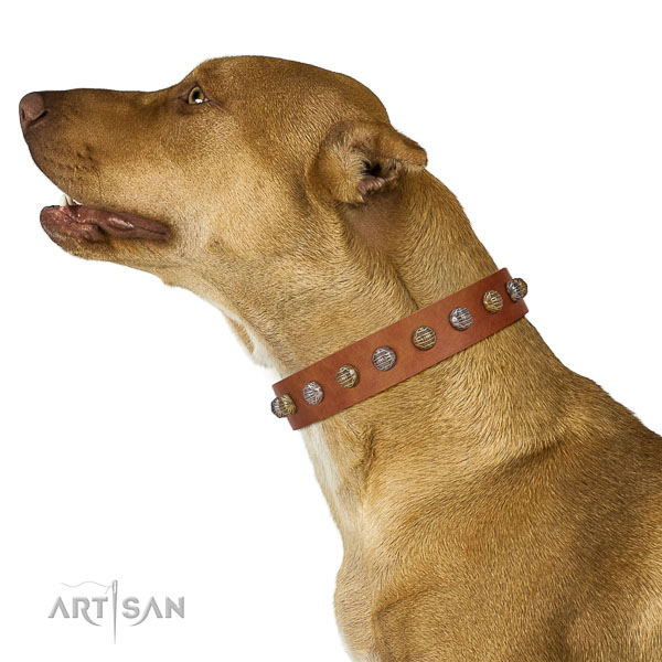 Extraordinary collar of genuine leather for your attractive doggie