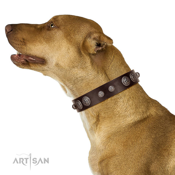 Everyday use flexible genuine leather dog collar with adornments