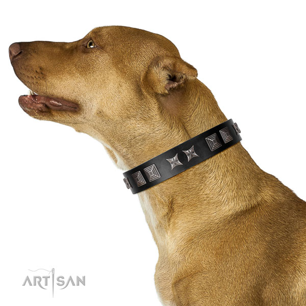 Natural leather dog collar with inimitable studs made four-legged friend