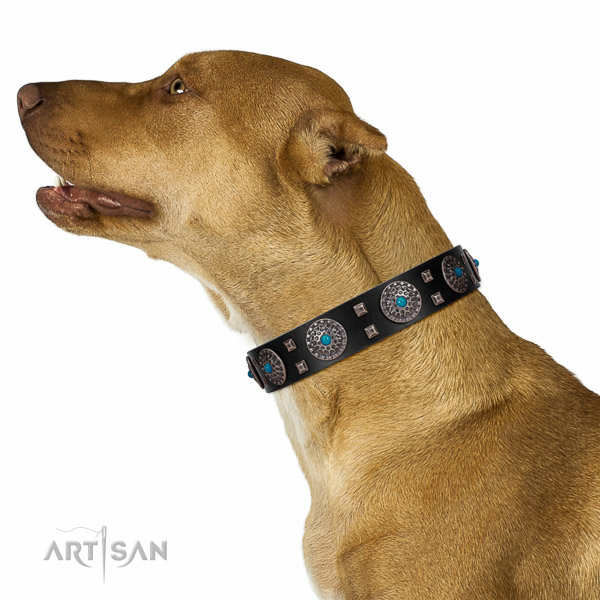Comfy wearing full grain genuine leather dog collar with incredible embellishments