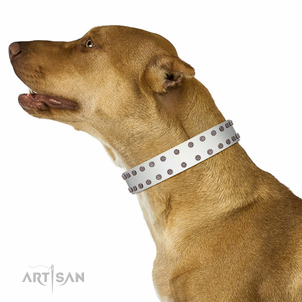Adorned full grain natural leather collar for comfy wearing your four-legged friend