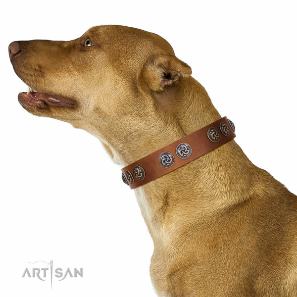 Strong traditional buckle on full grain natural leather dog collar for your canine