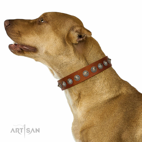 Awesome embellished full grain leather dog collar for fancy walking