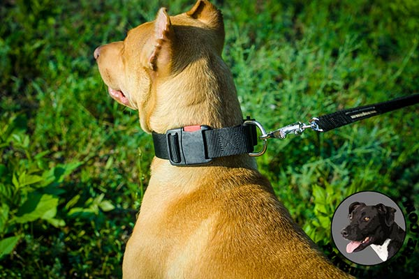 Easy training Pitbull collar