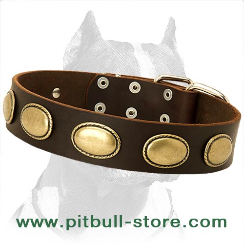 Ornated Leather Collar with rustproof hardware