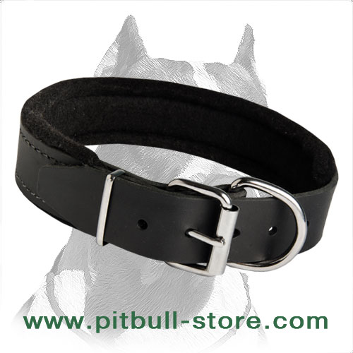 Felt padded Collar for active dogs