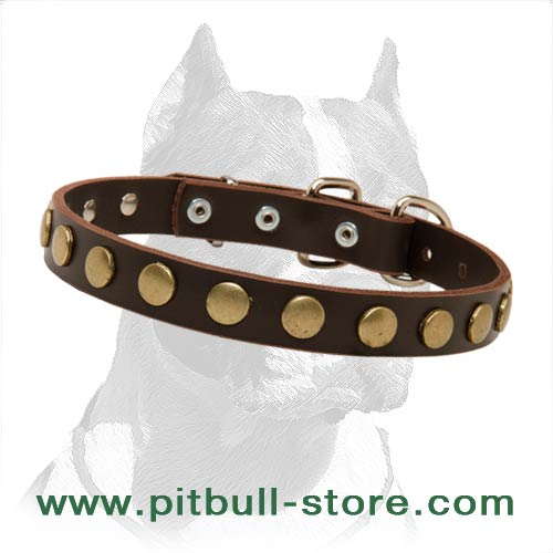 Astonishing 1 inch (25 mm) wide dog Collar