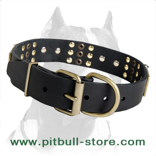 Perfect Collar with Strong Belt Buckle