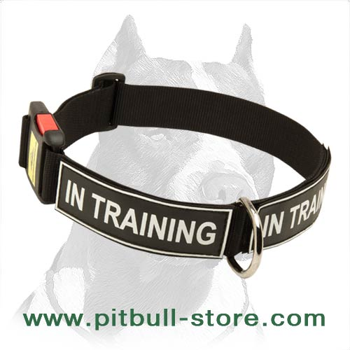 All-weather Pitbull Dog Collar