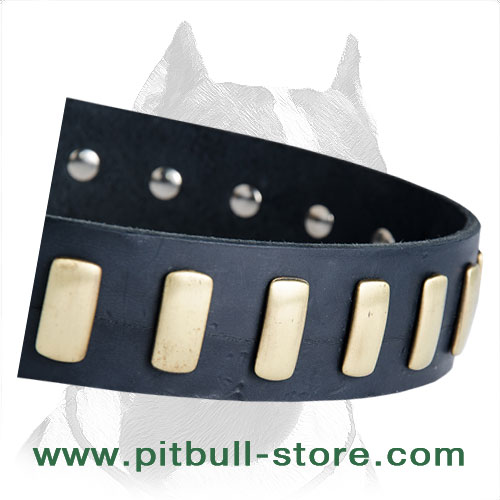 Pitbull leather collar hand set plate