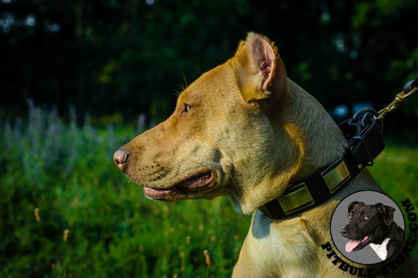 Handcrafted collar for Pitbull walking