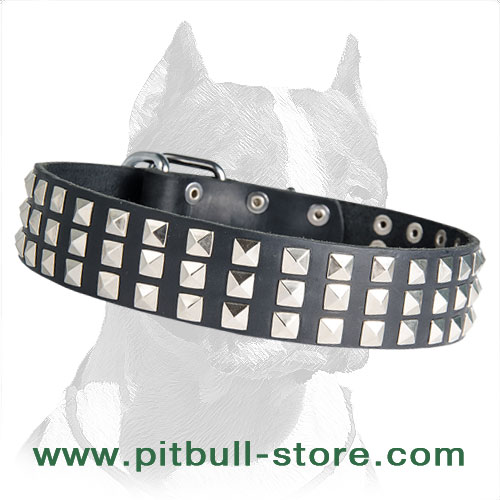 Collar leather Pitbull solid gear