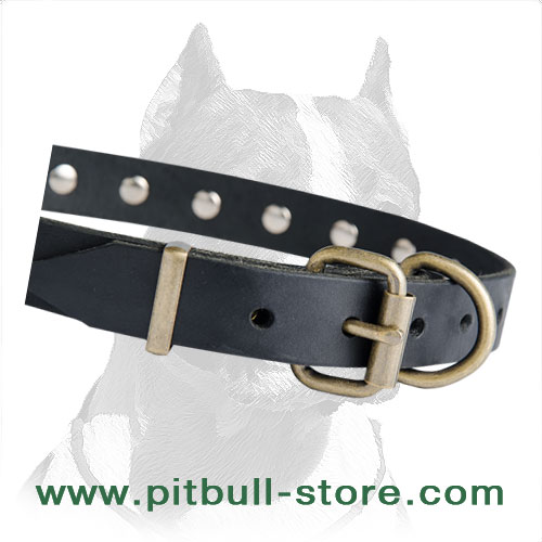 Collar leather for Pitbull with steel old brass plated buckle and D-ring