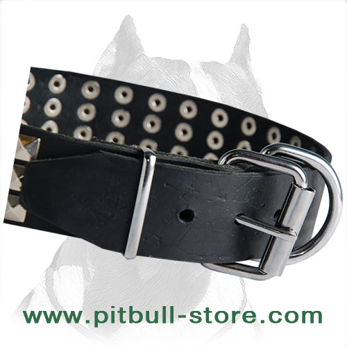 Pitbull collar leather with corrosion resistant fittings
