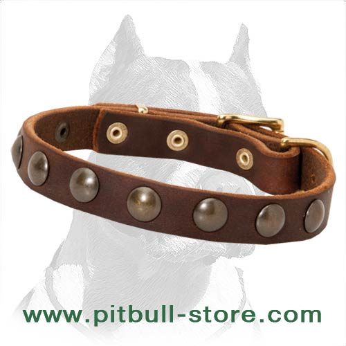 Pitbull leather collar lightweight