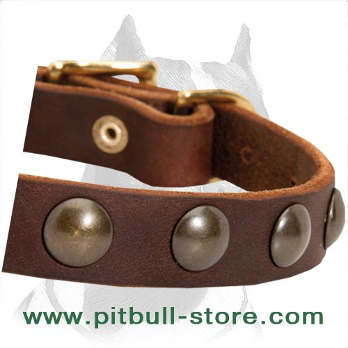 Collar leather for Pitbull durable material