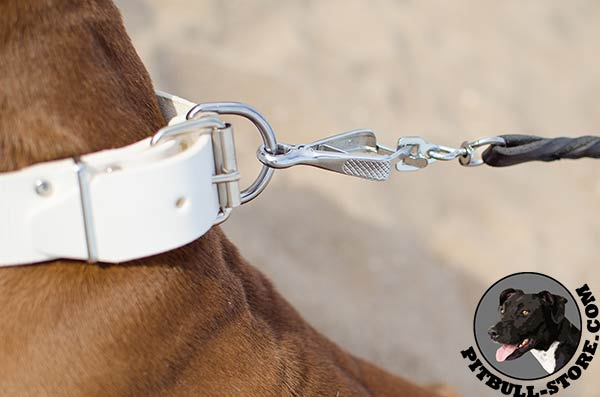 White genuine leather Pitbull collar with safe hardware