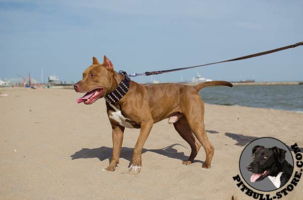 Extra strong Pitbull dog collar for walks in style