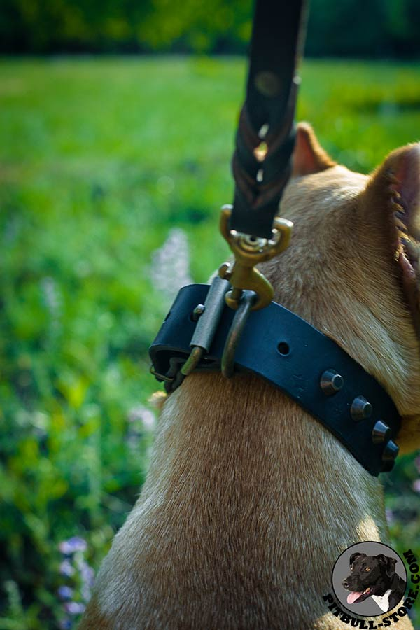 Sturdy brass hardware on Pitbull collar for walking