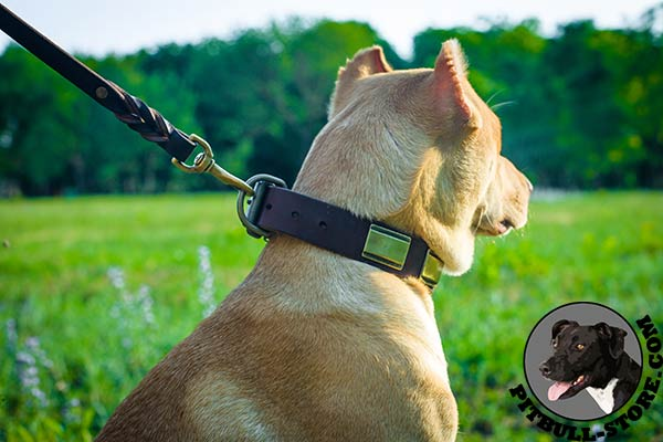 Pitbull collar made of specially selected leather