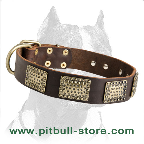 Collar for Pitbull with vintage plates