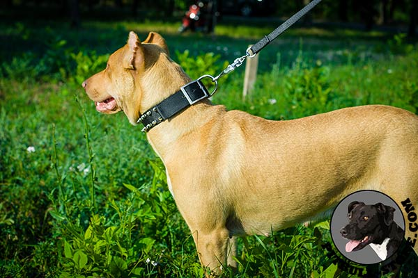 Reliable hardware on Pitbull collar