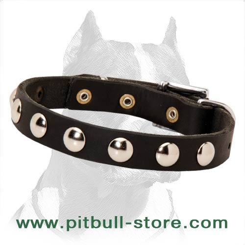 Collar leather for Pitbull with half-ball studs
