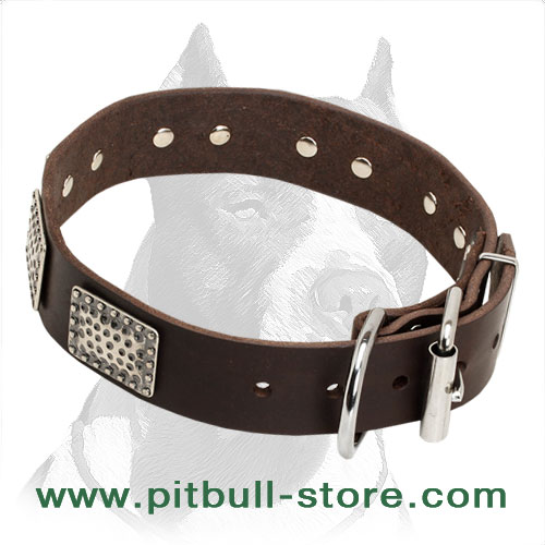 Leather dog collar with nickel hardware for Pitbull walking
