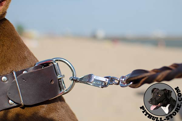 Leather Pitbull dog collar with shining D-ring