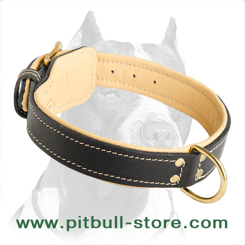 Pitbull leather collar extra durable